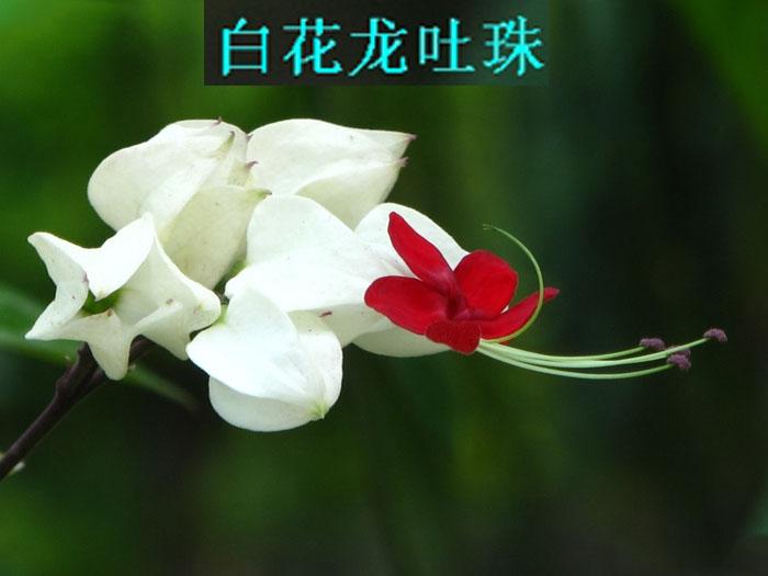 2013年07月31日 - 如火骄阳 -