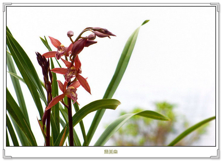 4486,兰心柔梦寂寞影(原创) - 春风化雨 - 春风化雨的博客