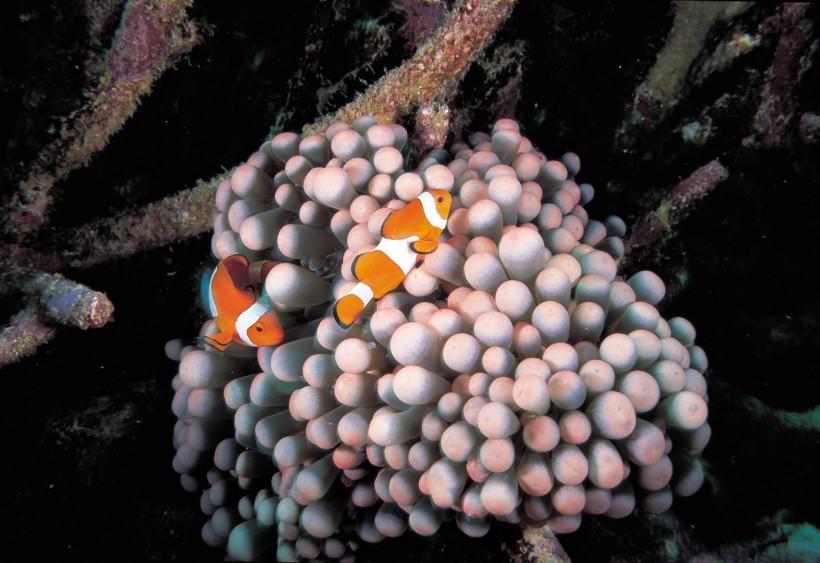小丑鱼和海葵 Powered by Discuz